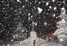 تمثال مار شربل عنايا تصوير شادي عيد